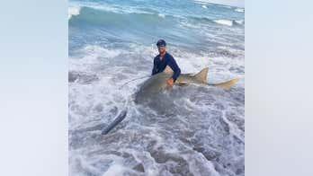 Fisherman hooks 11-foot endangered sawfish off Florida pier, releases it back into ocean