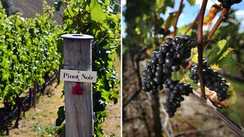 Popularity of Oregon wine leading out-of-state wineries to make false associations