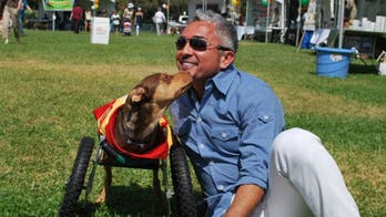 Cesar Millan: We Have a Dog Overpopulation Crisis