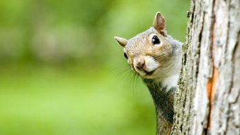 Passenger booted for 'emotional support squirrel' says she's contacting lawyer: 'I'm going for blood'