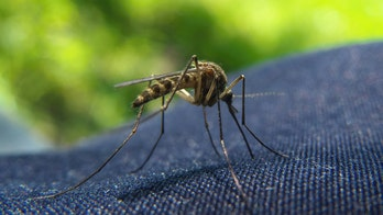 Keep mosquitoes away for good with these simple tricks