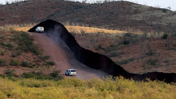 Experts warn 800 species, many endangered, affected by border wall