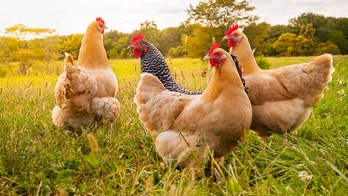 Virginia poultry plant investigated after 50 workers sickened with rare infectious disease
