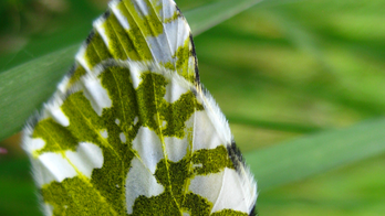 U.S. agency wants to protect butterfly found only on island