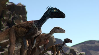 Fossilized remains of a baby dinosaur discovered in Alaska may alter how they're viewed