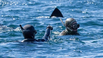 Terrifying moment snorkeler realizes massive shark is directly behind his friend