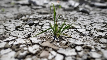 Germany's record drought could cause 'billions' in losses for farmers
