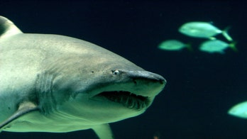 7 sharks found in New York man's home before his arrest on trafficking charges, officials say