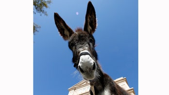 Donkey's July 4 death may prompt new laws on loud noises