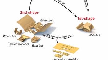 Transforming robot can swim, walk or glide