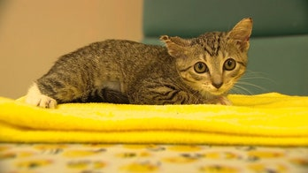 Florida kittens thrown out of cars in alarming new trend, group says