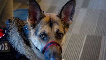 Stop discriminating against military veterans with service dogs