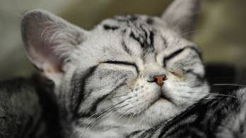 Cats can communicate with you via eye movement, research suggests