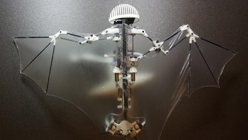 Meet the 'Bat Bot': Scientists unveil robot that flies just like a bat