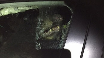 Black bear gets stuck in car and totals it