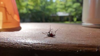 5 ways to repel mosquitoes without ruining your outdoor vibe