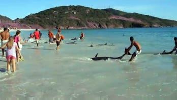 Increíble video de turistas rescatan delfines