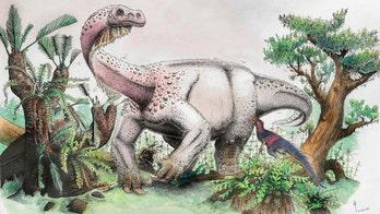 Amazing giant dinosaur discovery: New dino species identified