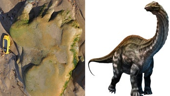 Stunning dinosaur discovery: 170-million-year-old footprint found in Scotland