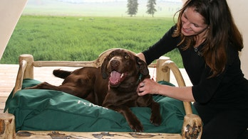 Montana resort caters to dogs with gourmet meals, mixers and four-legged fashion shows