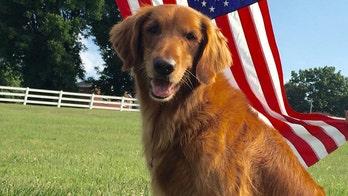 'Duke,' a former Bush's Baked Beans dog, has died