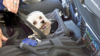 Coronavirus outbreak: How to travel with pets