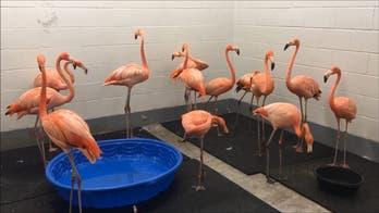 As Hurricane Florence lashes North Carolina coastline, zoos prepare for the worst