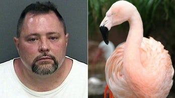 Florida man hit, killed by truck weeks before trial in beloved flamingo's death