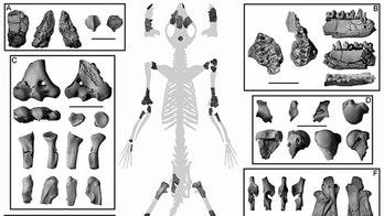 Partial skeleton reveals primate ancestors dwelled in trees