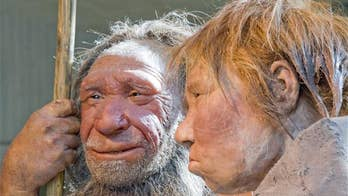 Neanderthal beachcombers went diving for seashells, scientists discover