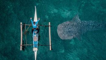 Photographer captures whale shark swimming beneath sleepy fisherman