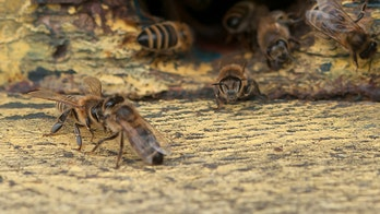 Texas couple stung by hundreds of bees outside home