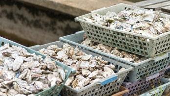 Washington bans shellfish harvesting after high levels of toxins found