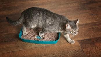 Cat parasite may make people more entrepreneurial