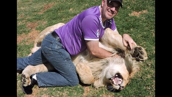 Chicago tourist cuddles with lion in South Africa, lives to tell about it