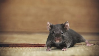 Keep mice away from your home with this surprising trick
