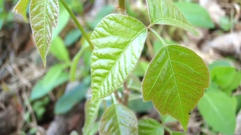 3 dangerous wild plants you want to avoid while hiking