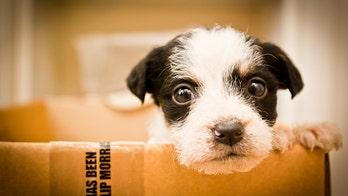 Dear Santa: Trump, Obama and Congress could all use a dog, please