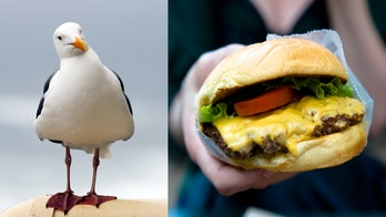 New Hampshire man fined $124 for kicking seagull that tried to eat his cheeseburger