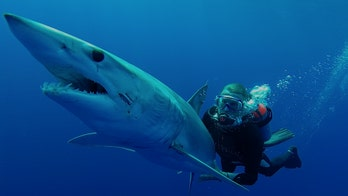 It's time to save sharks, not destroy them