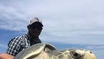 Georgia angler reels in rare Kemp's ridley sea turtle
