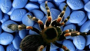 Veneno de araña podría remplazar el Viagra