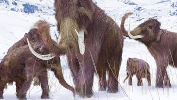 Could reviving Woolly-Mammoth genes fight the effects of global warming?