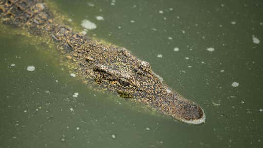 Woman snatched by crocodile in Australia while fishing with kids