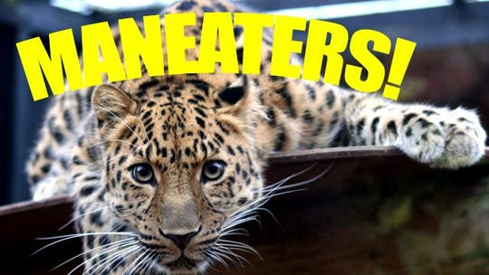 The World's Most Fearsome Man-Eaters