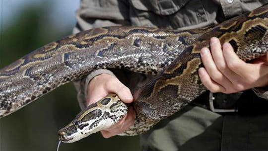 Detroit neighborhood encounters giant 18-foot python on garage roof