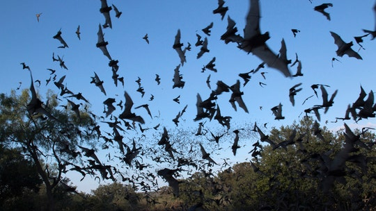 National Weather Service radar picks up huge bat colony in skies over Phoenix
