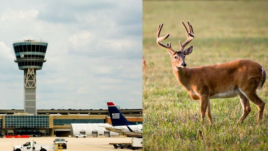 Interior Department OK's deer hunting near Philadelphia International Airport