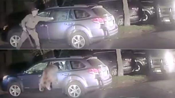 Video: Cop breaks car window to free bear that got stuck inside