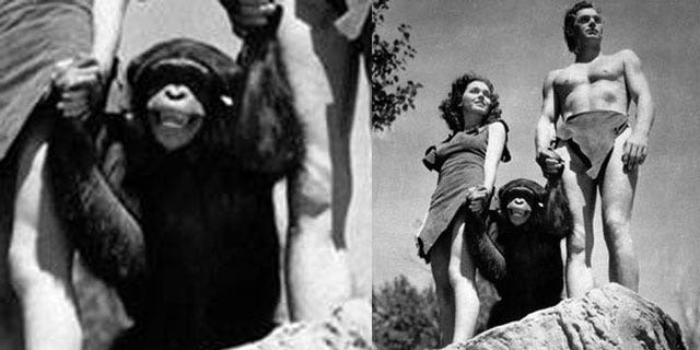 """The character of Cheetah, played by a number of chimpanzees over the years, first appeared in """"Tarzan the Ape Man"""" (1932) starring Johnny Weissmuller and Maureen O'Sullivan."""